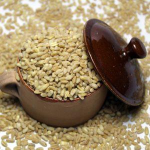 Buy Wheat Gandum Online